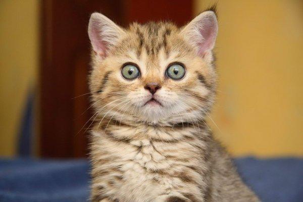 Живодер из Ростова брызнул соседскому коту перцовым баллончиком в морду