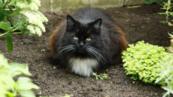В Турции построят специальную кошачью деревню – СМИ