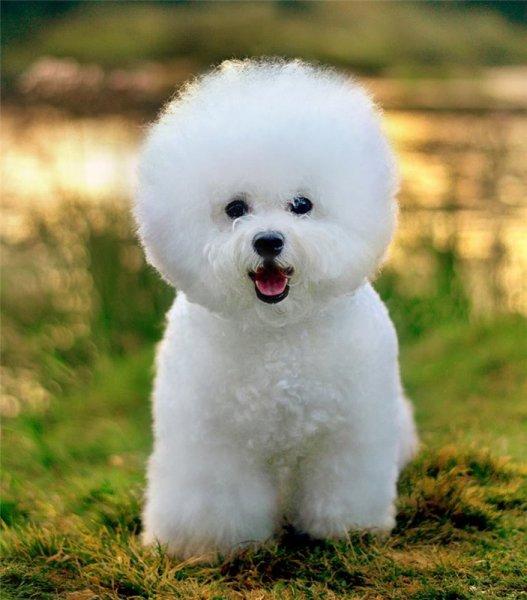 Непослушная собака променяла дрессуру на «обнимашки»