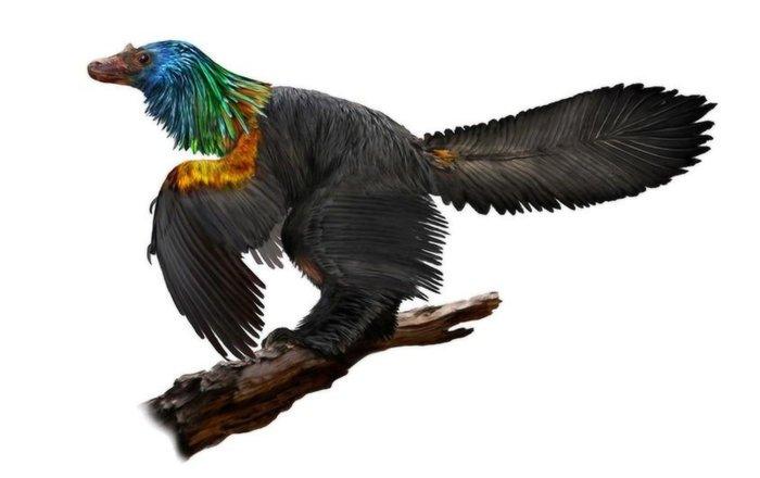 В КНР отыскали скелет динозавра, который был похож насовременную ворону
