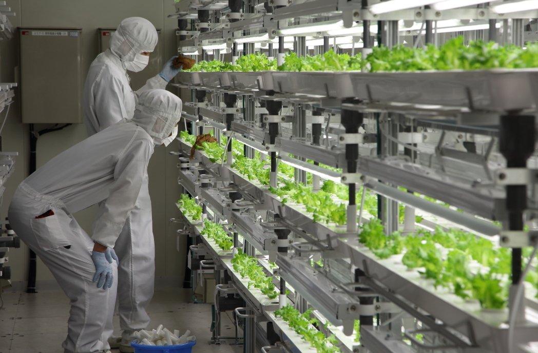 Ученые вывели овощи для Марса