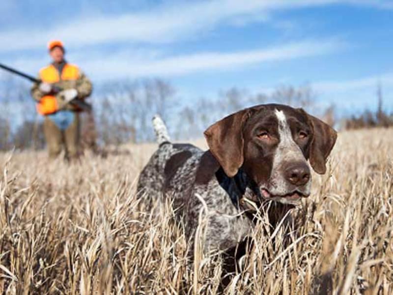 В РФ собачка случайно застрелила владельца изегоже ружья