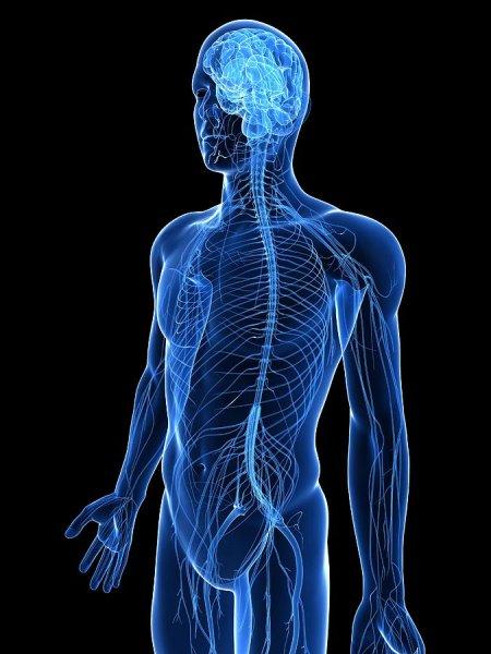 Медики рассказали об отрицательной роли холестерина при рассеянном склерозе