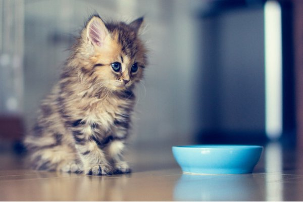 Жительница Ростова убила котенка из-за неприязни к его хозяйке