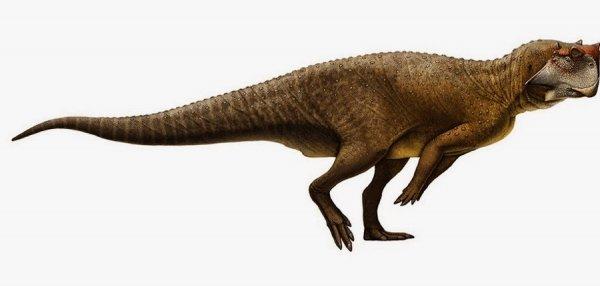 Учёные по форме анального прохода динозавра смогут определить пол