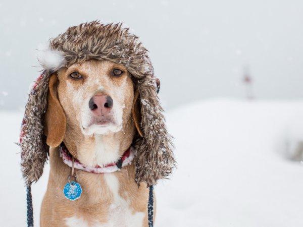 В Приморье мужчина спас собаку с примерзшим языком к люку