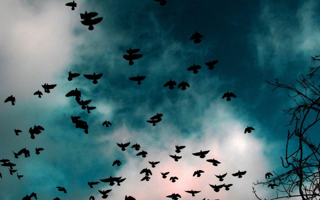 Необъяснимое нашествие птиц вСША попало накамеры