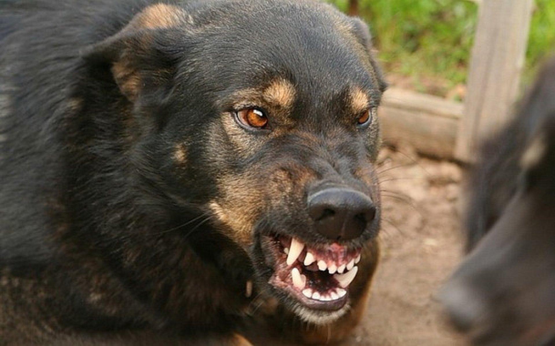 ВВолгоградской области 25 человек пострадало отукусов бешеных животных