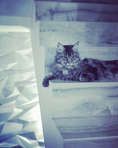 Разыскивается хозяин: Ирина Дубцова отдаст своего кота из-за аллергии
