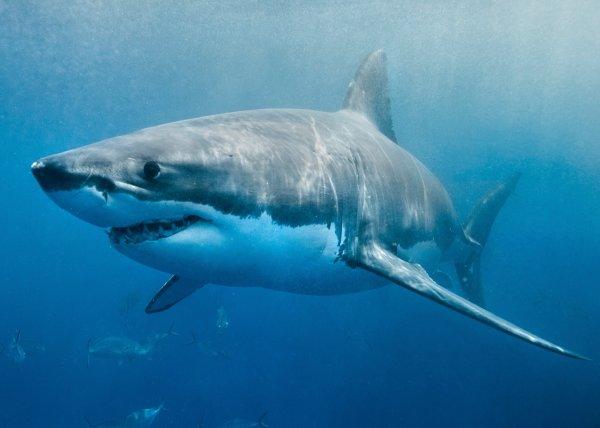 Рыбак из Австралии чудом спасся после столкновения с акулой