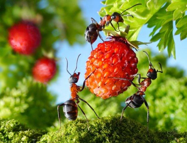 Учёные: Муравьи лечат больных собратьев и не заражаясь от них