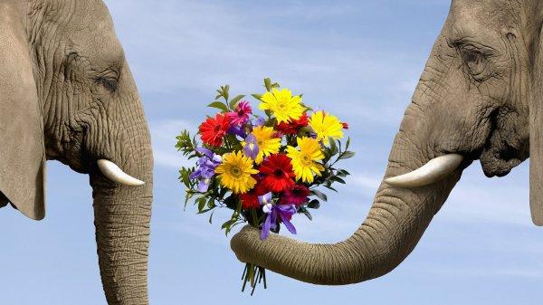 Финские ученые нашли у слонов индивидуальные черты характера