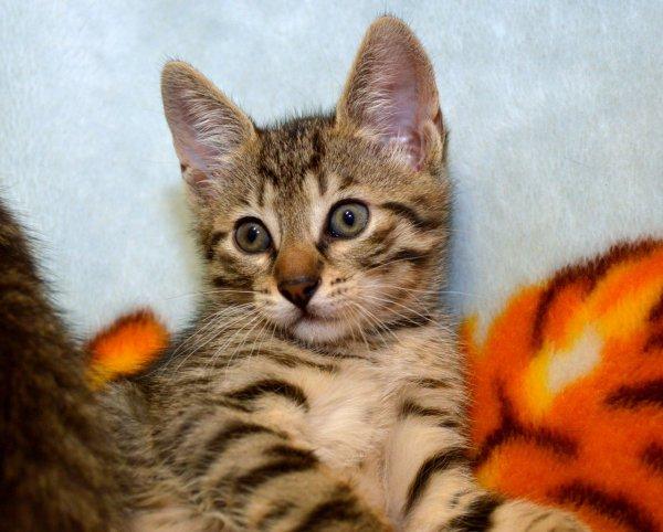 В Австралии спасли котенка с одним глазом и четырьмя ушками