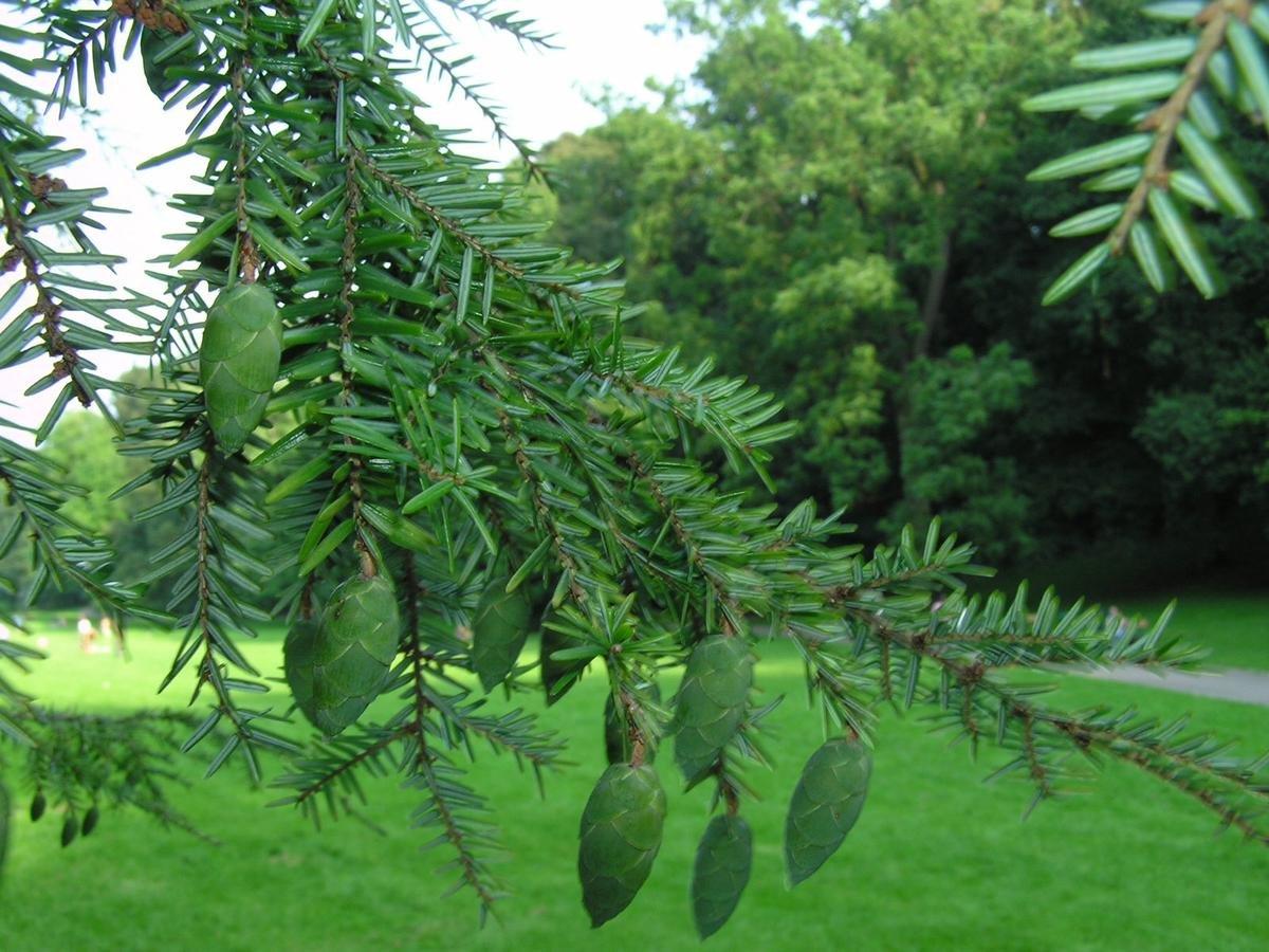 ВСША буря сломала посаженное 227 лет назад Джорджем Вашингтоном дерево