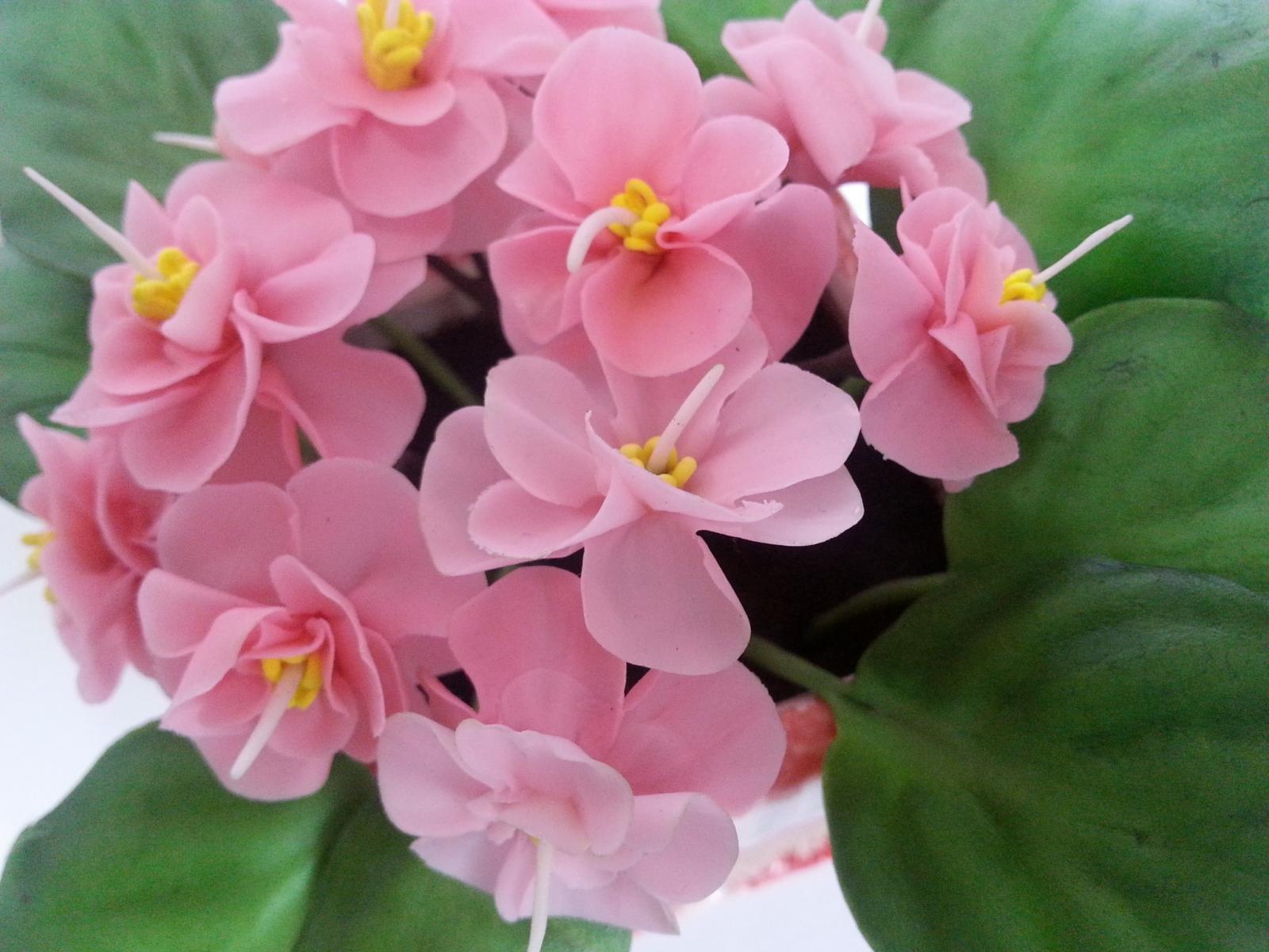 тульскую картинки с цветами красивые фиалка этим отрядах