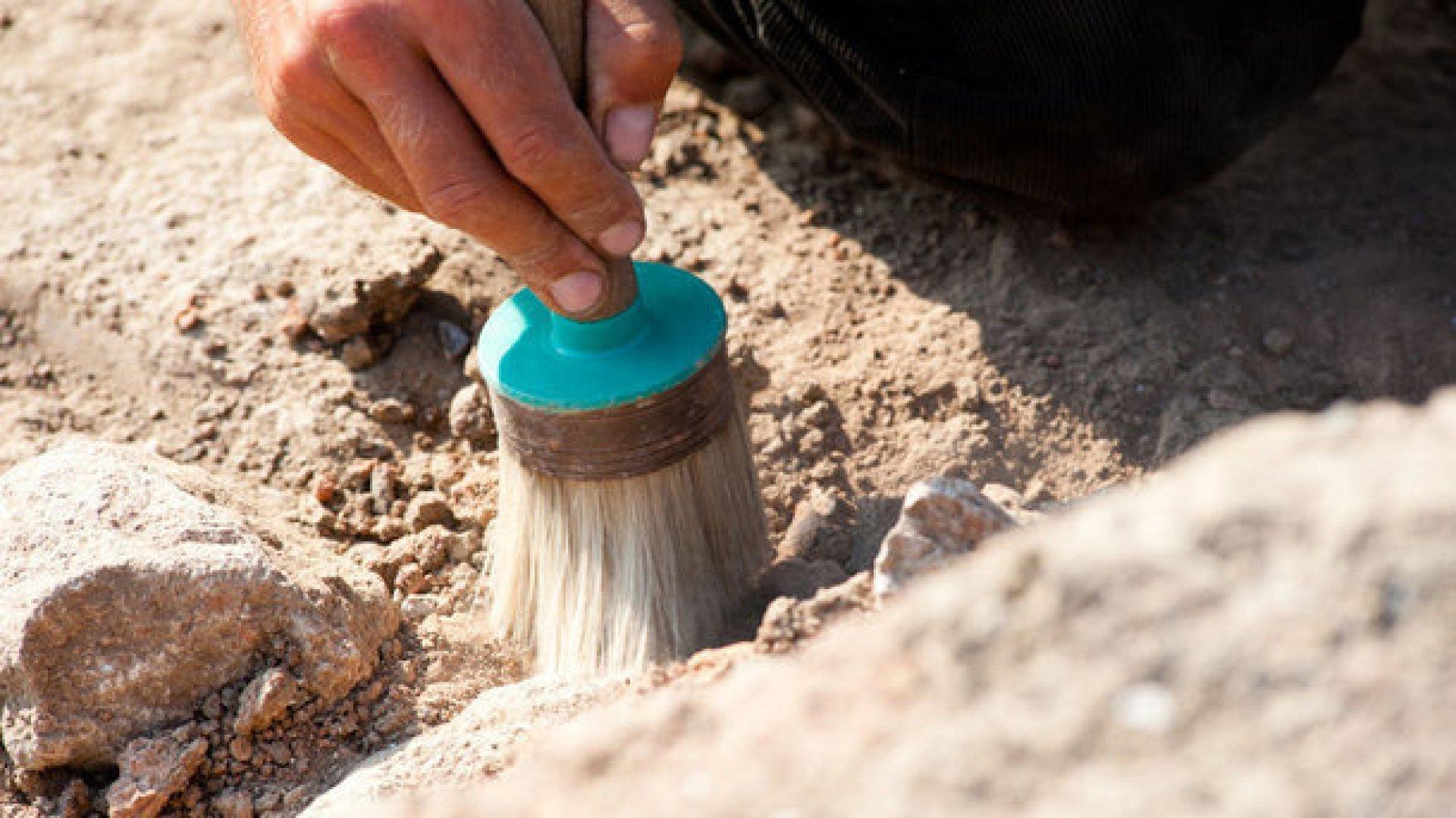 ВБритании обнаружили окаменевший лес возрастом около семи тысяч лет
