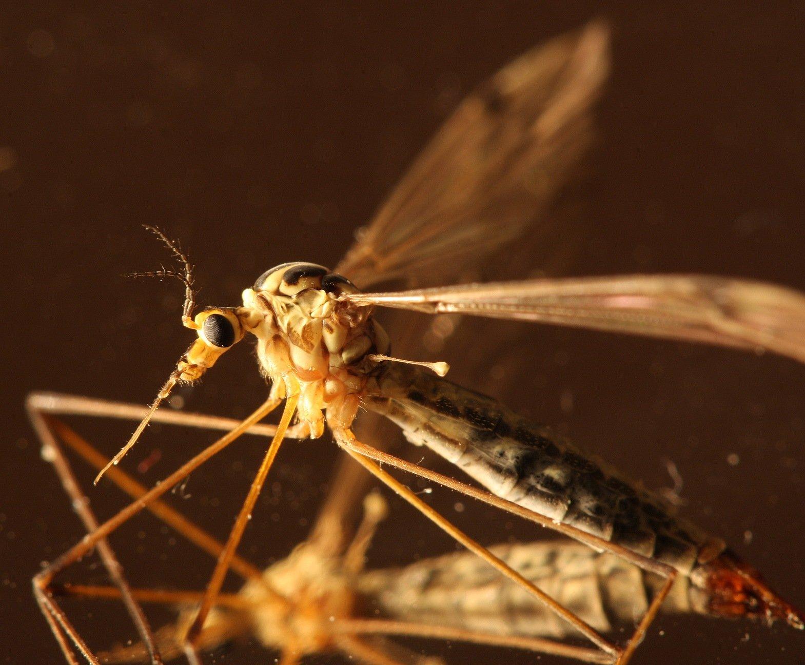 дизайнеры комар дергун фото массовым, промысел
