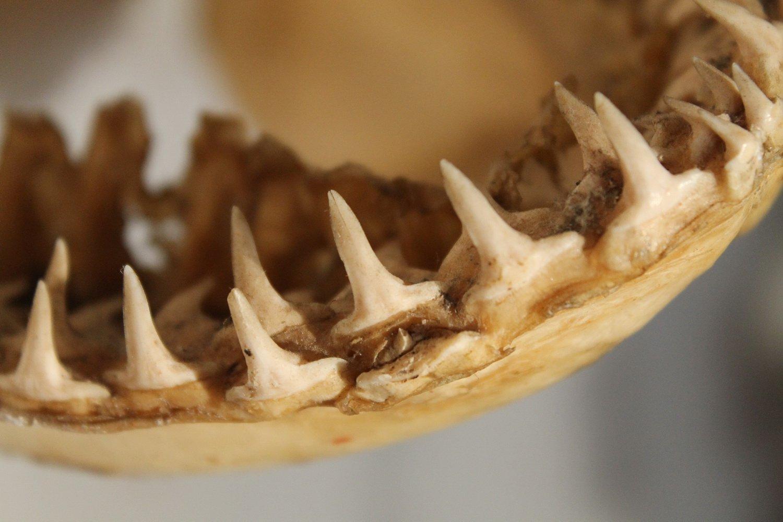 Наберегу  отыскали  собрата Лохнесского чудовища: ужасающие кадры