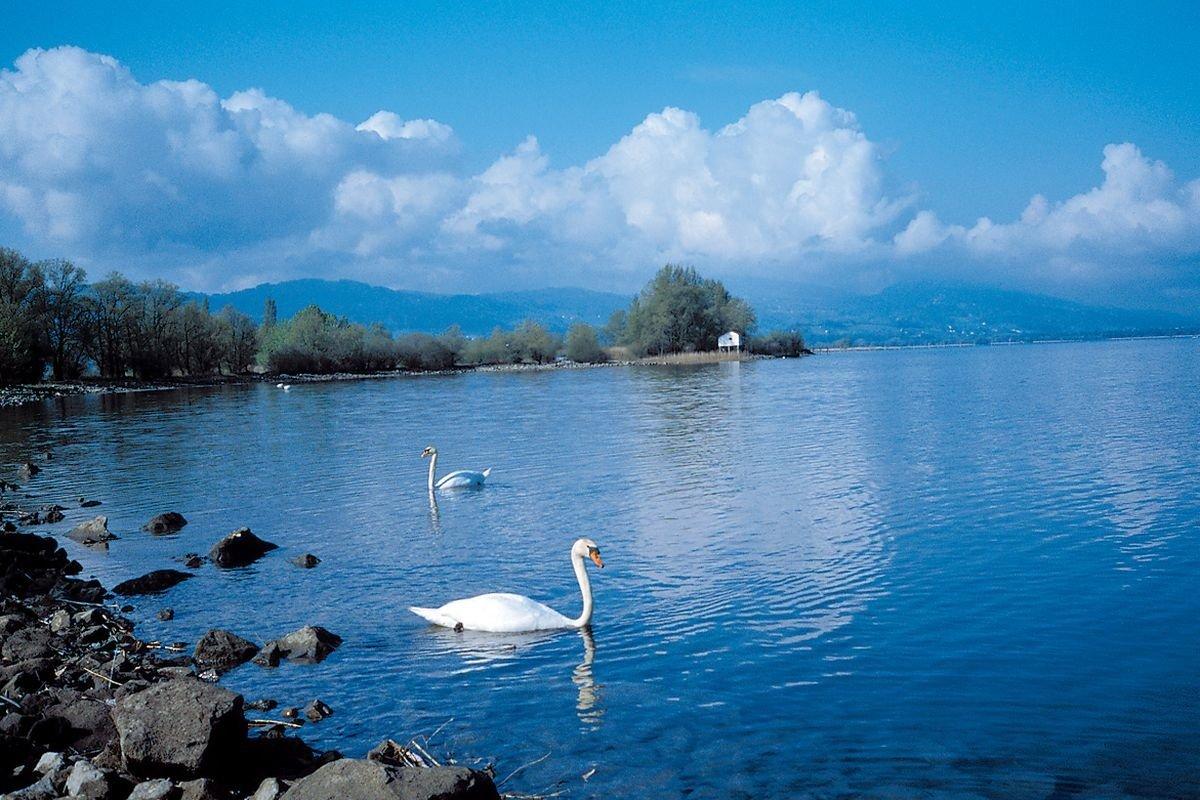 Дырявый ботинок возрастом 5 тыс. лет отыскали надне озера вШвейцарии