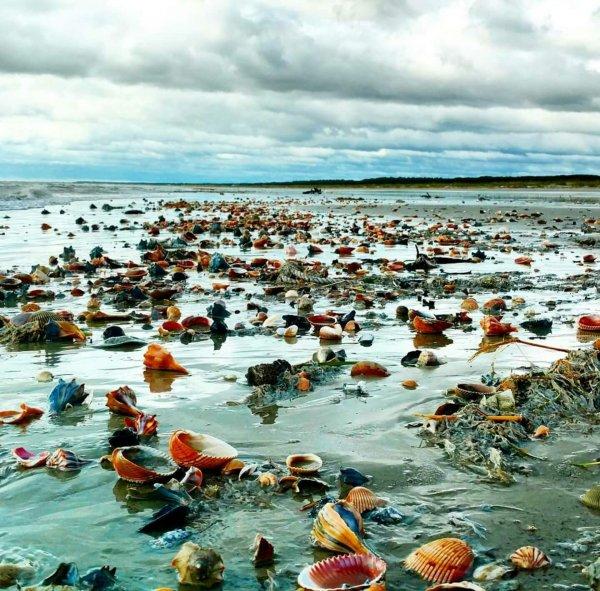 В результате шторма берег Великобритании усыпали миллионы морских звёзд