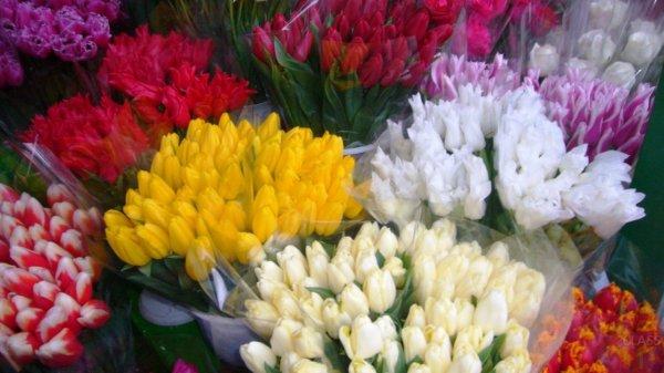 Роспотребнадзор дал советы мужчинам по выбору цветов к 8 марта