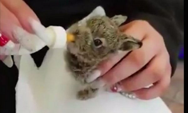 В аэропорту Дублина обнаружили брошенного зайчонка