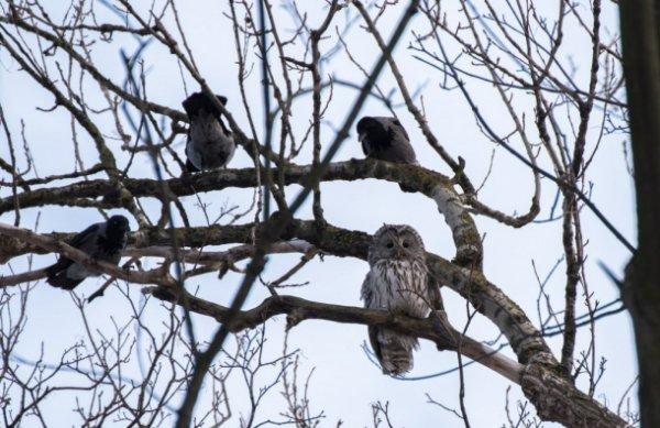 Петербуржцы стали свидетелями «птичьих разборок» на Васильевском острове