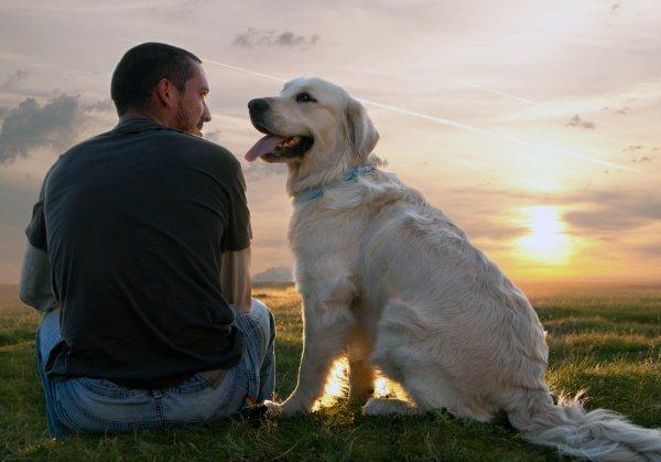 Ученые: Мужчины с собаками более привлекательны для женщин
