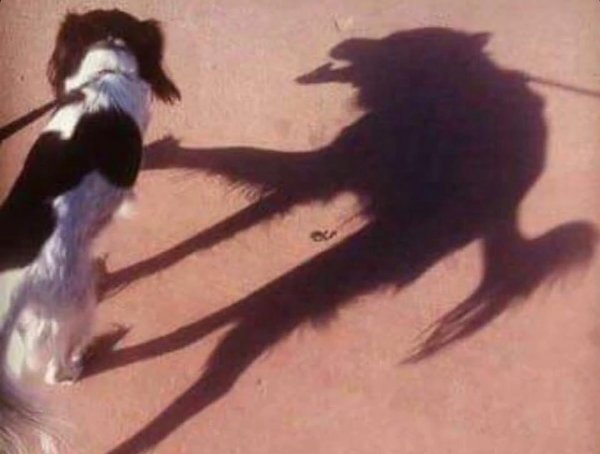 Гарик Харламов нашел собаку-оборотня
