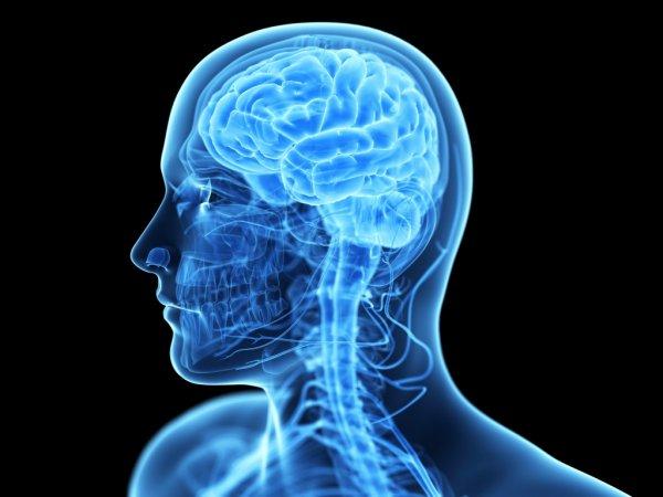 Носимый магнитоэнцефалограф визуализирует нейронную работу мозга