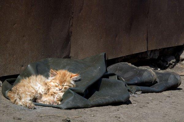 В Ростове участились издевательства над животными