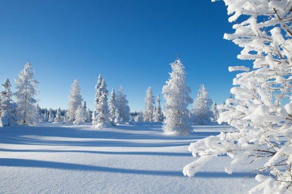 Ученые рассказали о плачевных последствиях затянувшейся зимы