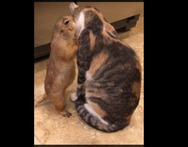 Кот, доводящий сурка до оргазма, стал героем Сети