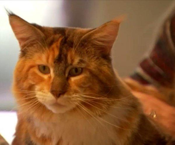 Кот из Техаса с уникальной ДНК стал звездой Сети