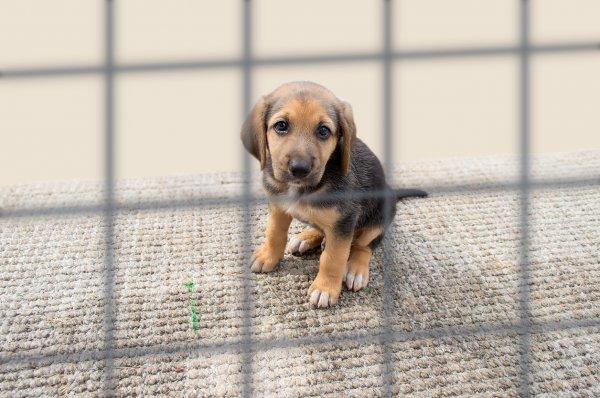 В Польше мужчину посадили на 10 лет за жестокое обращение с собакой