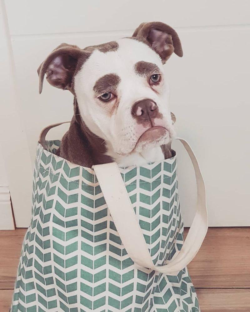 Пользователей сети покорил самый невеселый пес вмире