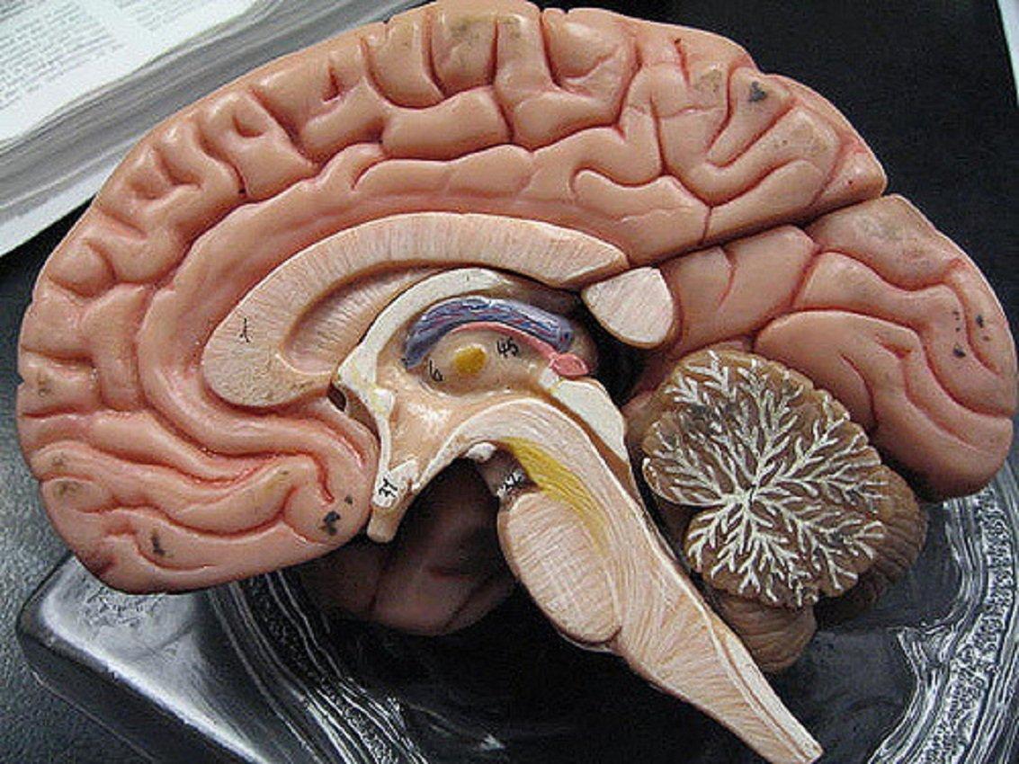 Учёные узнали, какую роль играли брови у старинных людей