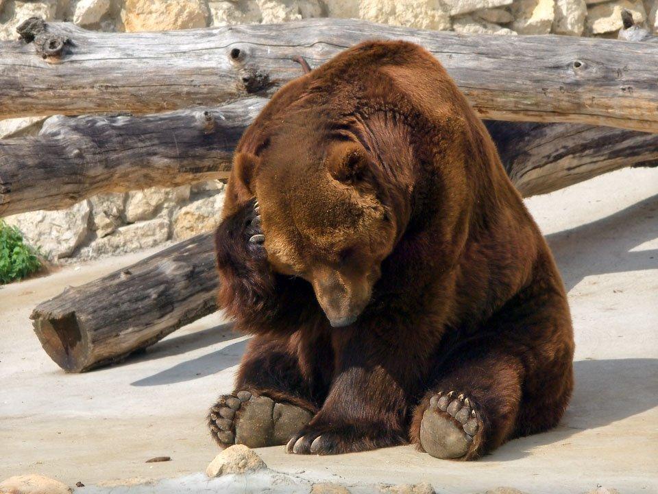 Секс медведем