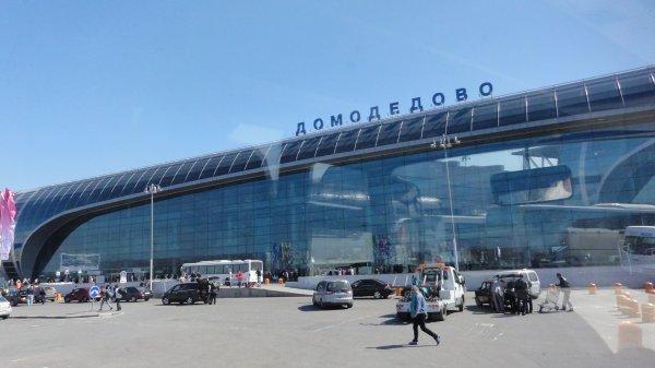 В Домодедово молодая пассажирка избила пограничника