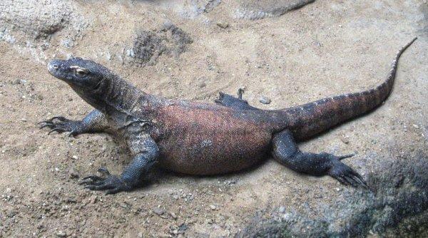 Ученые нашли останки древней ящерицы с четырьмя глазами