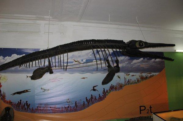Палеонтологи нашли часть скелета беременного ихтиозавра