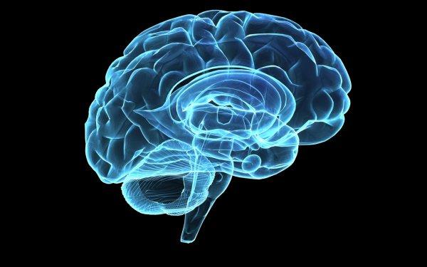 Ученые изобрели миниатюрный мозг человека с кровеносными сосудами