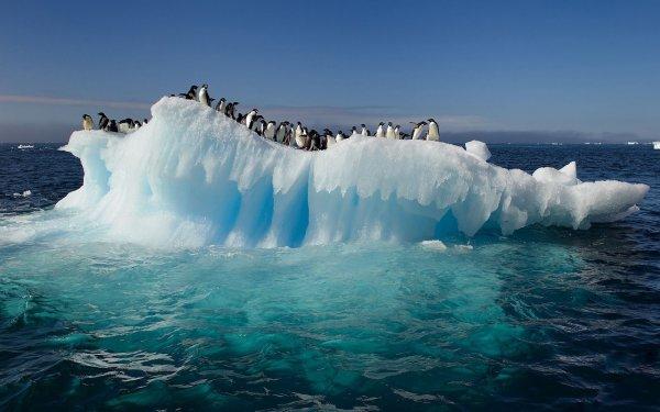 Теплые океанические течения размывают лед Антарктики