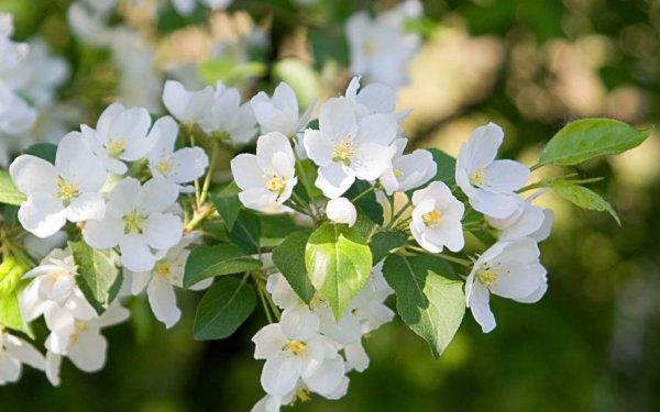 Учёным удалось найти белок, отвечающий за цветение растений
