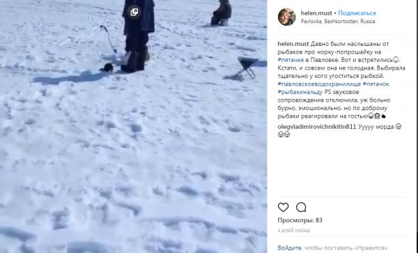 В Павловске норка-попрошайка требует от рыбаков их улов