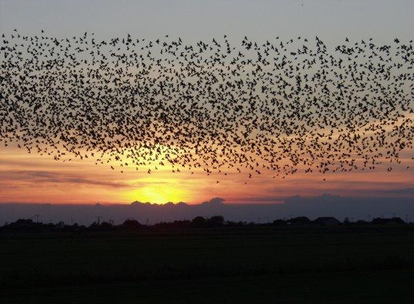 Ученые из США и Великобритании сделали сервис, предсказывающий время миграции птиц