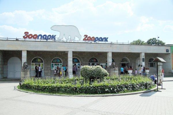 Белая медведица открыла купальный сезон в Ленинградском зоопарке