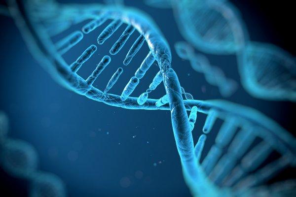 Ученые рассказали о сходстве ДНК животных и человека