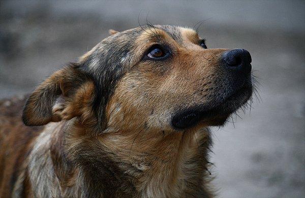 В Японии бездомный пес стал начальником ЖД вокзала
