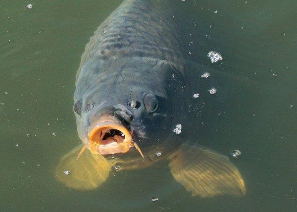 В Роспотребнадзоре рассказали, как нужно готовить рыбу, чтобы не заразиться паразитами